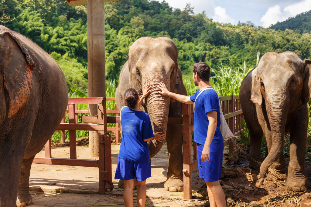 The Best Asia Holiday Destinations for Families - Chiang Mai, Thailand