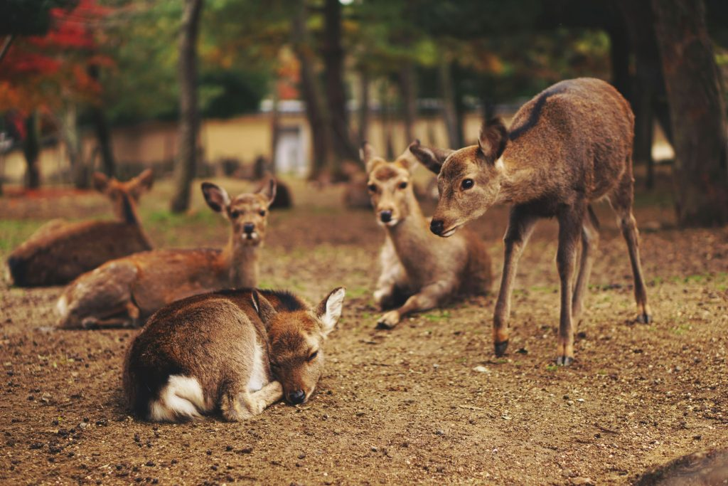 The Best Asia Holiday Destinations for Families - Nara, Japan